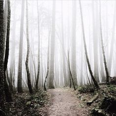 thejonmartincom:  Trails from a fairy tale // captured by @genevalehnert #peopleofnorth by peopleofnorth http://ift.tt/1ATahA4