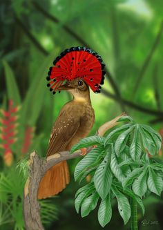 Royal Flycatcher (Digital Painting) | by Rick-Lilley Digital Art / Drawings & Paintings / Animals©2012-2014 Rick-Lilley |  Native to the Amazon. 3 photos used for the bird, and 4 for the scene. About 20 hours to create.