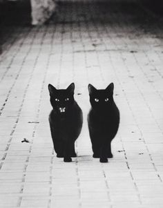 scary kitty cat photography cute Black and White creepy b&w Halloween cats black Grunge meow kittens