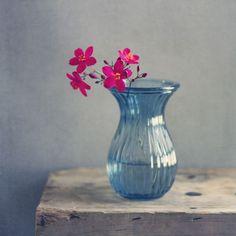 Still Life Photography by Anna Nemoy - 121Clicks.com: