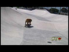 El gran Tillman!!...le encanta surfear, montar en monopatín y hacer snowboard....es un campeón!  :o)