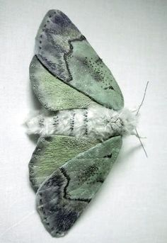 Yumi Okita   | https://www.etsy.com/listing/172676295/fabric-sculpture-large-turquoise-moth   |  http://www.thisiscolossal.com/2014/07/textile-moth-and-butterfly-sculptures-by-yumi-okita/