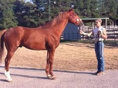 Preferred Issue(2007)(Colt) Giant's Causeway- Be A Prospector By Mr Prospector. 3(F)x4(F) To Raise A Native, 5x4 To Hail To Reason. 3 Starts Unplaced. $1,712.