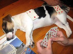 card table jrt