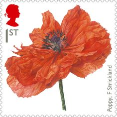 Fiona Strickland designs new Royal Mail stamp Royal Mail Stamps, Uk Stamps, Postage Stamps, Spiegel Online, Flower Stamp, Flower Art, World War One, Stamp Collecting, Mail Art