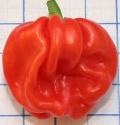 Sweet Habanero, Organic Pepper Seeds, (Capsicum chinense) looks and smells like a Habenero, sweet and Fruity,No Heat