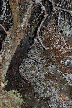 Los recovecos del Pedregal son el hogar de sus habitantes