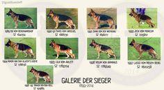GSD Galerie Der Sieger 1989 - 1999