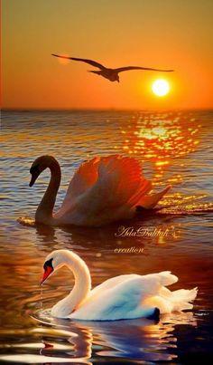Beautiful Landscape Wallpaper, Beautiful Flowers Wallpapers, Scenery Wallpaper, Beautiful Landscapes, Sunset Wallpaper, Most Beautiful Birds, Beautiful Nature Pictures, Pretty Birds, Animals Beautiful