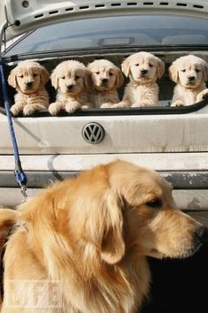 PUPPIES AND A VW...THIS IS TOO AMAZING