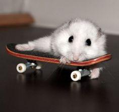 Skate or die.