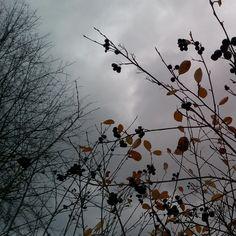 Talven odotusta. Waiting for a wintertime#syksy#talvenodotus#autumn#sowindyanddark#momentsofmylife