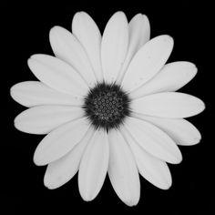 Une Fleur Pour Charlie / July