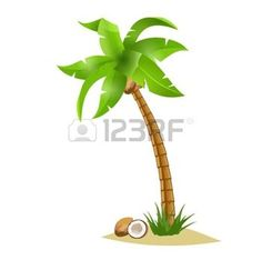 palm tree: A  bent palm tree width coconuts isolate on white. Summer team. Illustration