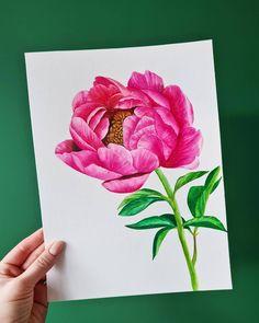 Peony watercolor illustration by Studio Sonate Watercolor Illustration, Peony, Studio, Prints, Instagram, Design, Peonies, Studios
