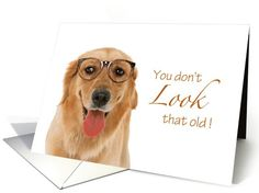 Dog Birthday - You don't LOOK that old! card (1050965) by Simply put by Robin