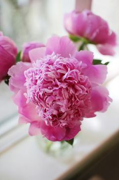 someday ill have beautiful peonies!