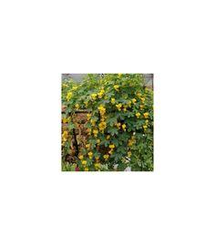 Lichořeřišnice pnoucí stěhovavá - prodej semínek - Tropaeolum peregrinum - okrasné rostliny Painting, Art, Art Background, Painting Art, Kunst, Paintings, Performing Arts, Painted Canvas, Drawings