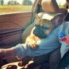 sweet lovely Frenchie | french bulldog hug