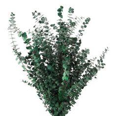 Ashland® Eucalyptus Bunch, 16 oz.