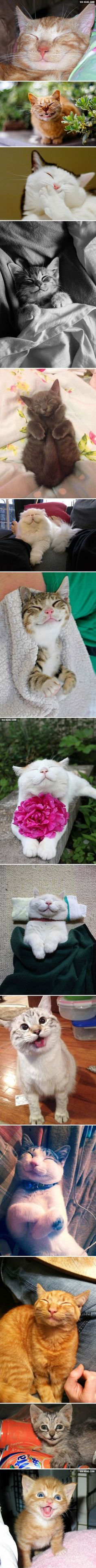 The Happiest Cats cute animals cat cats adorable animal kittens pets kitten funny animals funny cats Happy Animals, Animals And Pets, Funny Animals, Cute Animals, Cute Cats, Funny Cats, Raining Cats And Dogs, Love Pet, Cats And Kittens
