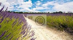 Provence 3 na obrazech myloview. Nejlepší kvality fototapety, myloview sbírky, nálepky, obrazy, plakáty. Chcete si vyzdobit Váš domov? Pouze s myloview!