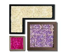 Cling #Wall - #frames in oak #wood, Premium #Hydrangea - several #colours and combinations. - by #LinfaDecor