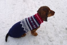 Dachs + Marius genser - Can't get any cuter! Knit Dog Sweater, Dog Sweaters, R Dogs, Dog Life, I Love Dogs, Animal Kingdom, Needlework, Miniatures, Patterns