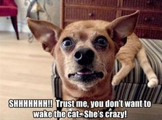 21 Funny Animal Pictures Of The Day #funny #picture