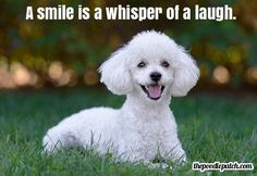 A SMILE IS A WHISPER OF A LAUGH