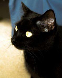 My beautiful cat Jett