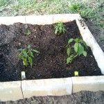 vegetable-garden-soil
