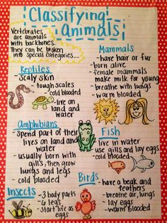 Image result for classifying animals chart