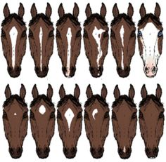 Terminology for the facial markings on a horse.  Top row, L-R: Blaze, Stripe, Stripe (or thin blaze) and snip, Irregular blaze, Interrupted stripe, bald face. Bottom row, L-R: Faint star, Star, Star and strip, irregular star, snip, lip marking.
