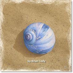 735X735 BLUE SHELL ON BROWN BEACH FILE.jpg (735×734)