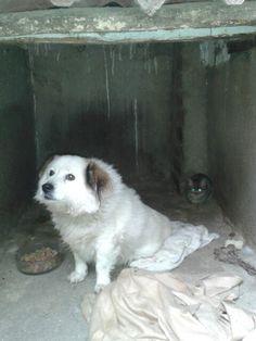 Paquito Dogs, Animals, Animales, Animaux, Doggies, Animais, Dog, Animal