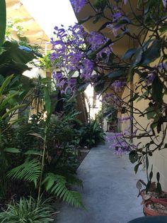 The Garden Courtyard area @hairwizb50