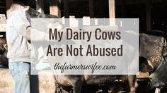 My Dairy Cows Are No