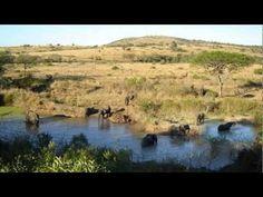 Thula Thula Game Reserve - Buscar con Google