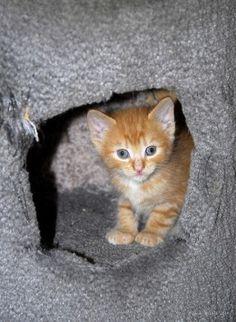 Week by Week Caring for Newborn Kittens