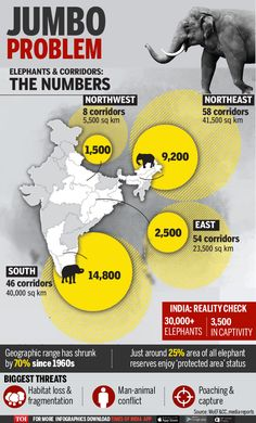Infographic: Tuskers in a tight spot - Times of India