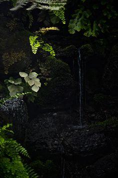 rasluka17:  Foggy Ferns by jason.knudson on Flickr.