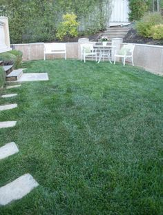 greener lawn with ammonium sulfate