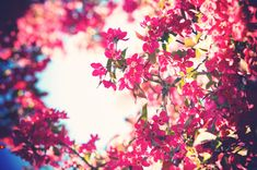 blooming flower - Google Search