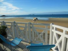 Seame The Seagull In St Malo, France: Seame visited our deck in our beachside hotel every day in St. Malo, France.