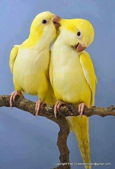 How cute they are🐤