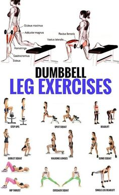 Top 5 Dumbbell Exercises for A Leg-Destroying Workout . - Top 5 Dumbbell Exercises for A Leg-Destroying Workout - Dumbbell Leg Workout, Sixpack Workout, Weighted Leg Workout, Body Weight Leg Workout, Muscular Legs Workout, Toned Legs Workout, Leg Workout Women, Best Leg Workout, Hamstring Workout