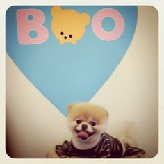 Boo the dog visit Chronicle Books