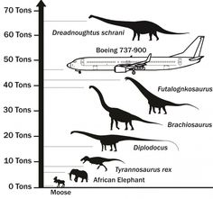 DREADNOUGHTUS, 65 TONS, TAKES TITLE of largest terrestrial animal :: Newly discovered dinosaur