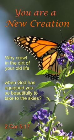 butterfly inspiration from 2 Corinthians 5:17- If you have received Jesus as your Savior you are a new creation in Him. This is why you are free from sin including the sin of homosexuality. If you continue in His Word and become His disciple you will experience that freedom, John 8:31-32.